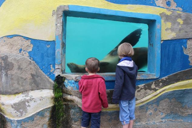 Trieste zeeleeuw